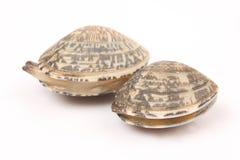Verse tweekleppige schelpdieren Stock Foto's