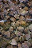 Verse tweekleppige schelpdieren bij de markt Stock Afbeeldingen