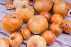 Verse uibollen op witte achtergrond Groenten voor een gezonde voeding De uien zijn rijk aan nuttige vitaminen Uischil royalty-vrije stock foto's