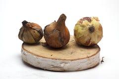Verse uien op een houten tribune op witte achtergrond/verse uien Stock Foto's