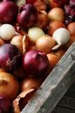 Verse uien in rustiek krat Stock Foto