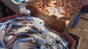 Verse vangst van pijlinktvis, garnalen en krab stock footage