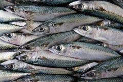 Verse vissen royalty-vrije stock foto