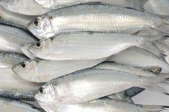 Verse vissen Stock Foto's
