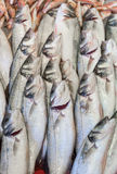 Verse vissen Royalty-vrije Stock Foto's