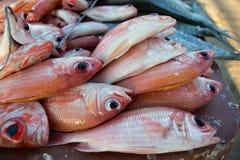 Verse vissen bij de vissenmarkt op het strand Stock Foto's