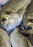 Verse vissen bij een lokale markt Stock Foto