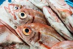 Verse vissen bij een vissenwinkel Stock Afbeelding