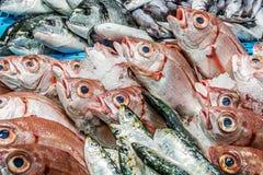 Verse vissen bij een vissenwinkel Royalty-vrije Stock Foto's
