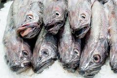 Verse vissen bij een vissenwinkel Royalty-vrije Stock Afbeelding
