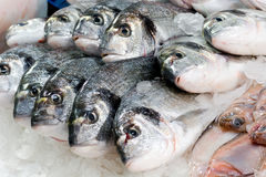 Verse vissen bij een vissenwinkel Stock Foto