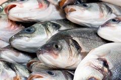 Verse vissen bij een vissenwinkel Stock Fotografie
