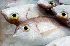 Verse vissen bij een vissenwinkel Royalty-vrije Stock Afbeeldingen