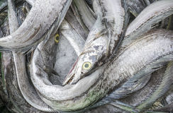 Verse Vissen bij Lange Hai-vissenmarkt Royalty-vrije Stock Foto