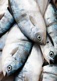 Verse vissen bij markt Royalty-vrije Stock Afbeelding
