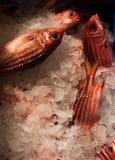 Verse vissen in de markt Royalty-vrije Stock Foto's