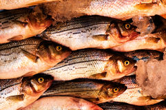 Verse vissen in de markt Stock Afbeeldingen