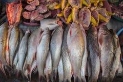 Verse vissen in de markt Myawadi, Myanmar Royalty-vrije Stock Afbeelding