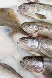 Verse vissen in de supermarkt Royalty-vrije Stock Fotografie