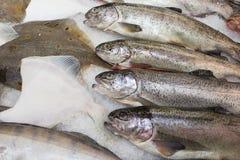 Verse vissen in de supermarkt Royalty-vrije Stock Foto