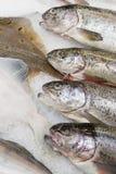 Verse vissen in de supermarkt Stock Afbeelding