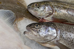 Verse vissen in de supermarkt Royalty-vrije Stock Foto's