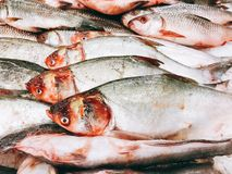 Verse vissen in de supermarkten royalty-vrije stock foto's