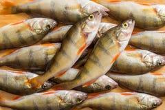 Verse Vissen De verse toppositie van riviervissen Op een gele houten backgroun stock fotografie