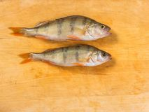 Verse Vissen De verse toppositie van riviervissen Op een gele houten backgroun stock foto's