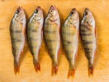 Verse Vissen De verse toppositie van riviervissen Op een gele houten backgroun stock afbeelding