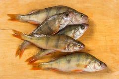 Verse Vissen De verse toppositie van riviervissen Op een gele houten backgroun royalty-vrije stock foto's