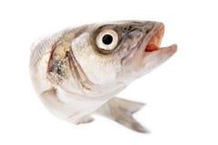 Verse vissen die op wit worden geïsoleerdg Royalty-vrije Stock Afbeelding