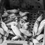 Verse vissen in dozen bij de markt Stock Afbeeldingen