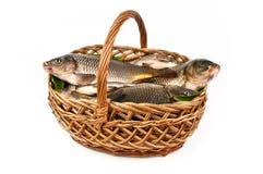 Verse vissen in een mand Stock Foto's
