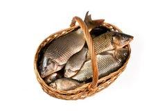 Verse vissen in een mand Stock Fotografie