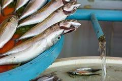 Verse vissen in een Turkse markt Royalty-vrije Stock Foto's