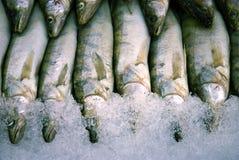 Verse vissen in het ijs Stock Foto