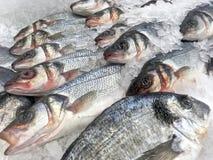 Verse vissen in ijsclose-up Stock Fotografie