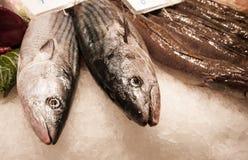 Verse vissen in Mercat DE La Boqueria, Barcelona, Spanje Royalty-vrije Stock Afbeelding