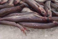 Verse vissen op de markt Royalty-vrije Stock Foto's