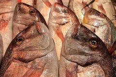 Verse vissen op de markt Stock Foto's