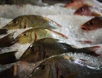 Verse vissen op de vertoning stock foto's