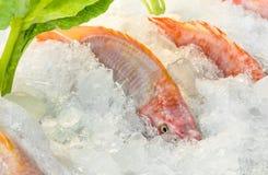 Verse Vissen op Ijs Stock Fotografie
