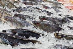 Verse vissen op ijs bij de vissenmarkt Stock Foto
