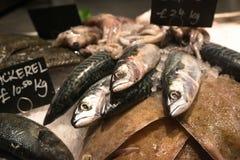 Verse Vissen op Verkoop in Winkel met Ijs Stock Afbeelding