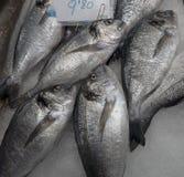 Verse vissen op vertoning Stock Fotografie