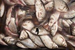 Verse vissen van overzeese markt Royalty-vrije Stock Fotografie