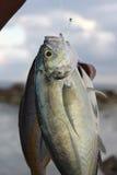 Verse vissen voor verkoop Royalty-vrije Stock Foto's