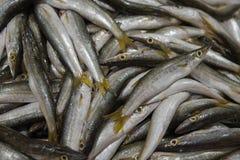 Verse vissen voor verkoop in Doubai stock fotografie