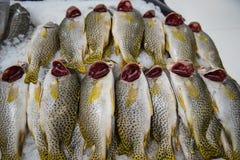 Verse vissen voor verkoop in Doubai royalty-vrije stock foto's